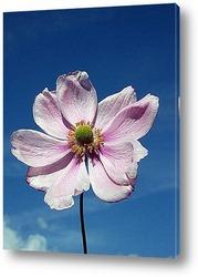 Постер Цветок из семейства лютиковых на фоне неба