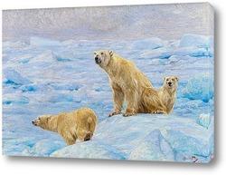 Постер Три полярных медведя