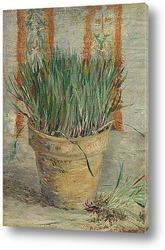 Постер Горшок с чесноком и зеленым луком