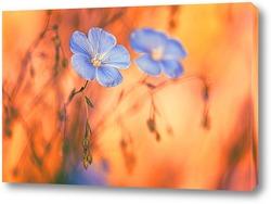 Постер Лён цветет