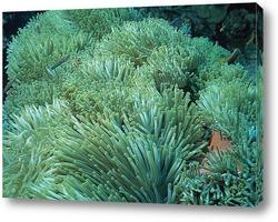algae040