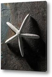 Постер Starfish021