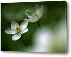 Flower553