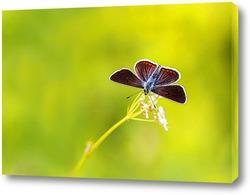 Постер красивая темная бабочка  сидит на лугу в окружении зеленой травы и солнечного света