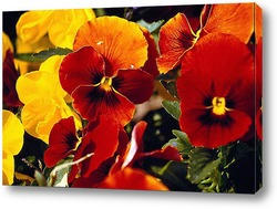 Pansies bouquet
