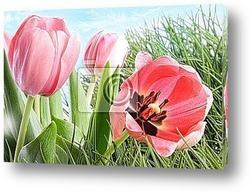 Pink tulips in tall grass
