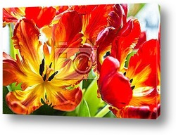 Yellow and white  tulip flowers with green  copy space