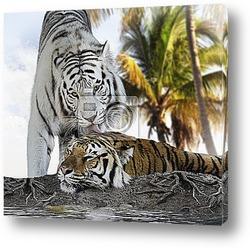 Постер Белый и коричневый тигры