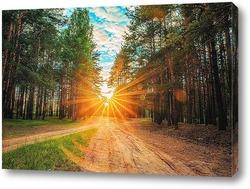 Постер Закат в лесу