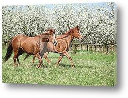 Два коричневых коня
