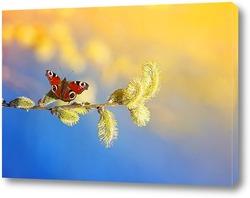 Постер бабочка собирает нектар с вербы