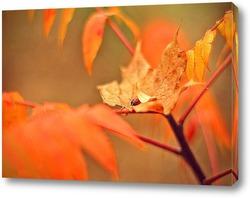 Осенняя колыбель.