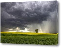 Постер перед дождем