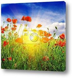 Постер Маковые поля в солнечных лучах