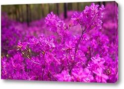 Деревья с розовой кроной