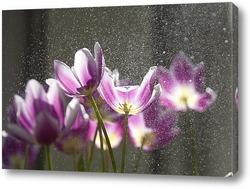 Постер тюльпаны под дождем