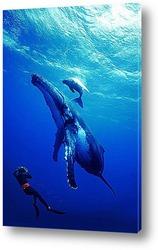 whale005