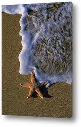 Постер Starfish010