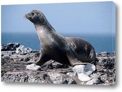 Постер Seal016