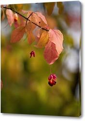 Постер Осенний бересклет