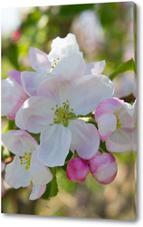 Картина Цветы яблони