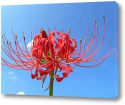 Flower695
