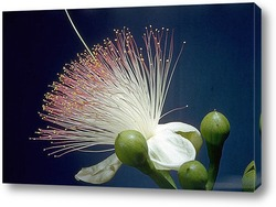 Flower630