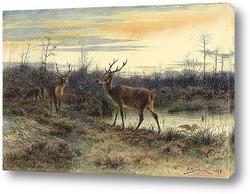 Картина Олень в лесу Фонтенбло