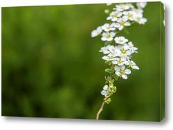 Постер Садовые растения цветут в весеннее время