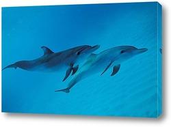 dolphin111