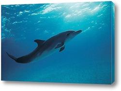 dolphin060