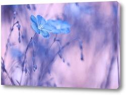 Постер Цветы льна с нежным тонированием