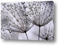 Постер Dandelion seeds
