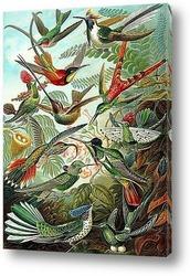 Постер Колибри