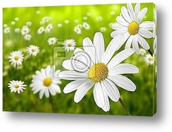 Постер Blumen 195