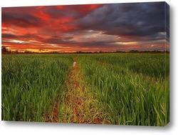 Постер Пшеничное поле в вечернее время