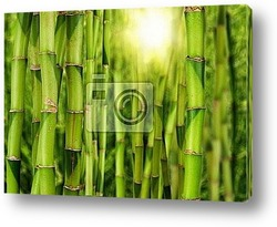 Бамбук, сад, парк, лес, растения, Азия