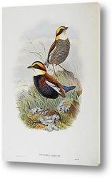 Птицы Великобритании,