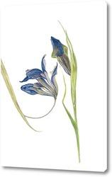Картина Ирисы. Серия сухоцветов.