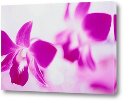 Flower452