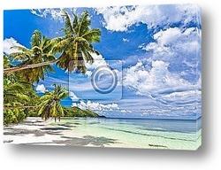 Постер Seychelles plage cocotier