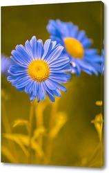 Постер Голубые астры