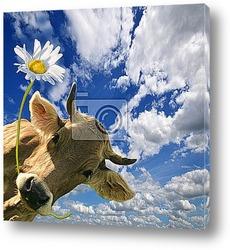 Постер Geburtstag: Kuh schenkt eine Blume