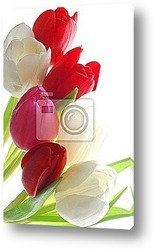 Close-up of bunch of pink tulips on white background