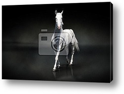 Лошадь на сером фоне