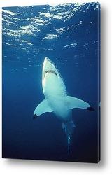 shark031