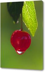 Постер вишня