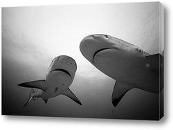 shark009