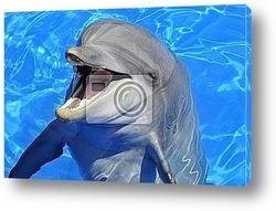 Постер Дельфин