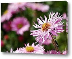pink aster flowers in basket on green background